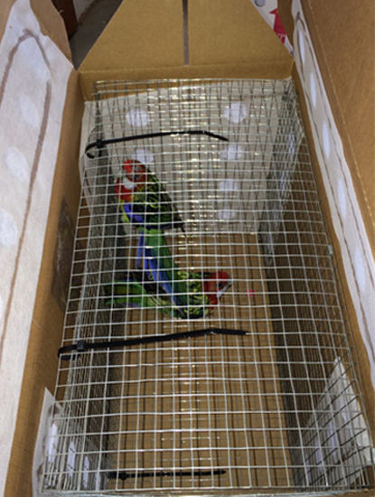 A Lot Of 3 Featherex Parrot Shipping Box 3 Wire Mesh Cage 3 Featherex Premier Box